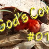 Gottes Kuh, Folge 01: Ueber die rote Namibia Spinne, versteinertes Holz und die Damara-Sprache