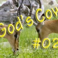 Gottes Kuh, Folge 02: Torra Wildreservat und Naturschutz im Damaraland